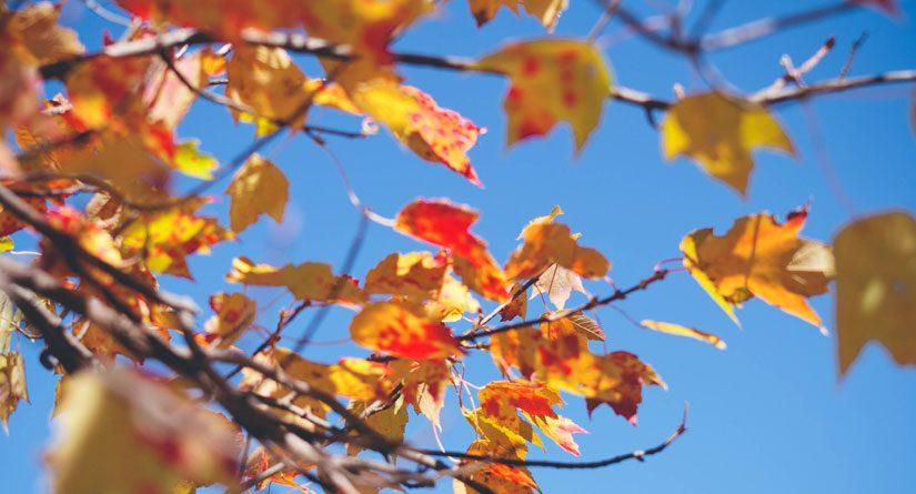 Accueillez l'automne convenablement