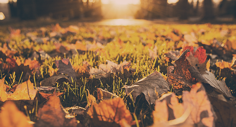 Les feuilles mortes et ses désagréments